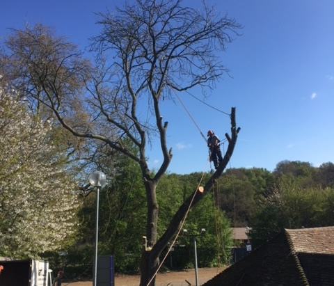 services section tree felling