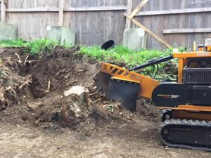 stump grinding and re-planting